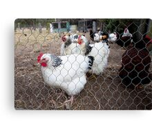 Hot Chocolate AND Exotic Chooks Canvas Print