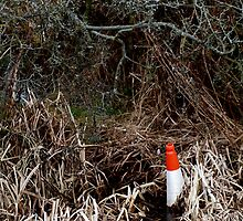Lost Traffic Cone by Graham Kidd