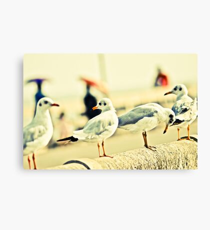 Ok, you can capture this side...quackkk...Got 2 Featured Works Canvas Print