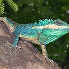 Blue Agama, Amarapura by EricKuns