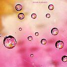 Gems on a Cob Web........ by AroonKalandy
