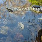 Alligator Lizard in the Water by EricKuns