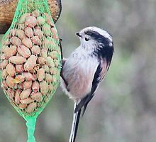 Long Tailed Tit by missmoneypenny