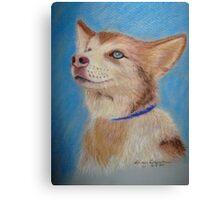 Malamute puppy Canvas Print
