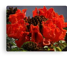 Tropical Beauty - Belleza Tropical Canvas Print