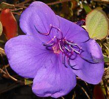 Purple Beauty by Kashmere1646
