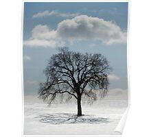 Backlit Tree  Poster