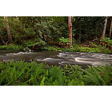 Manning River, Barrinton Tops Photographic Print