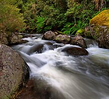 Manning River, Barrington Tops by Richard  Windeyer