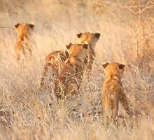 Brothers & sisters  by Jane Horton