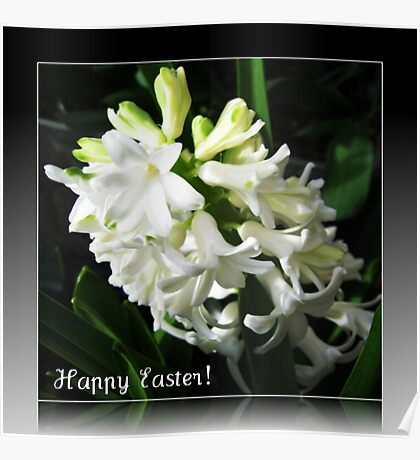 Easter Card with Dreamy White Hyacinth Poster