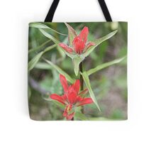 Indian Paintbrush ((Castilleja sp.) Tote Bag