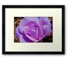 Enchanted Lavender  Framed Print