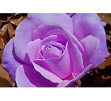Enchanted Lavender  Photographic Print
