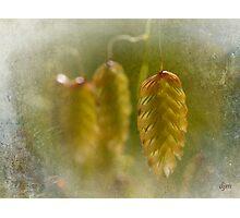 Renewal Photographic Print