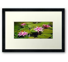 Water Lily Garden Framed Print