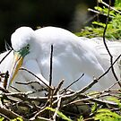 Are These Eggs Ever Going To Hatch?????? by Kathy Baccari