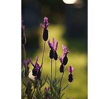 Rejoicing in warm light Photographic Print