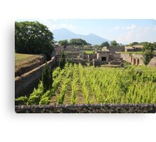 The Vineyards of Pompeii Canvas Print