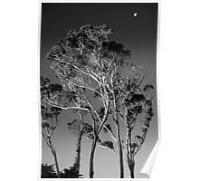 Eucalyptus Moon Poster