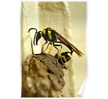 Wasp At Work Poster