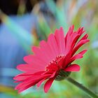 Pink Daisy by dez7