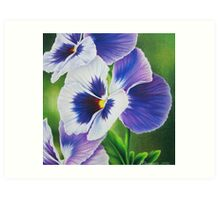 Pansy Faces Art Print