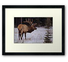 Big Bull Buffet Framed Print