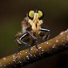 Ole Green Eyes by Peter Wickham