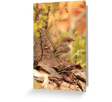 Female Fairy Wren Greeting Card
