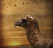 Evening at the Oasis by Carol Bleasdale