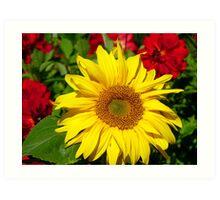 The Sun On A Cloudy Day - Sunflower - NZ Art Print