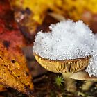 first snow by Manon Boily
