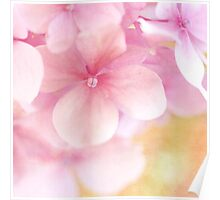 Pink Hydrangea Dream ... Beautiful Soft Pink Hydrangea Flowers Poster