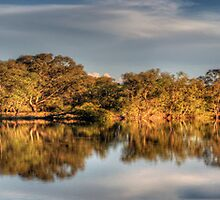 River  Glory  (Panoramic) - Murray River ,Albury , NSW - The HDR Experience by Philip Johnson