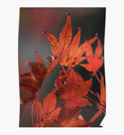 Autumn Leaves V Poster