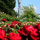BT Tower and Roses by jonshort58