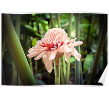 Tropical Gardens 6 - Torch Lily Poster