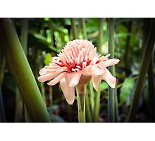 Tropical Gardens 6 - Torch Lily Photographic Print