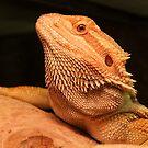 Bearded Dragon by leunig