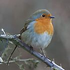 Robin by Gill Langridge