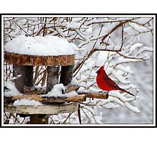 Mr. Cardinal on a snowy day Photographic Print