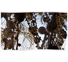 Pine Cone Tree 2 Poster