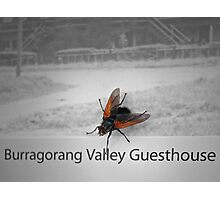 Flying Guest Photographic Print