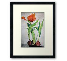 Tulips and Bulbs Framed Print