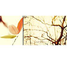 Fall Combo Photographic Print