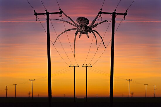 Arachnophobia...! by Geoff Carpenter