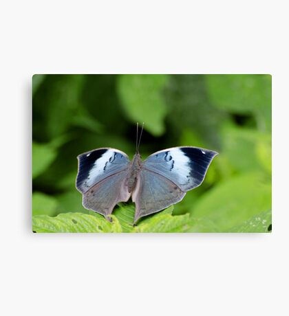 Blue Oak Leaf Canvas Print