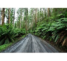 Mount Donna Buang, Yarra Ranges National Park Photographic Print