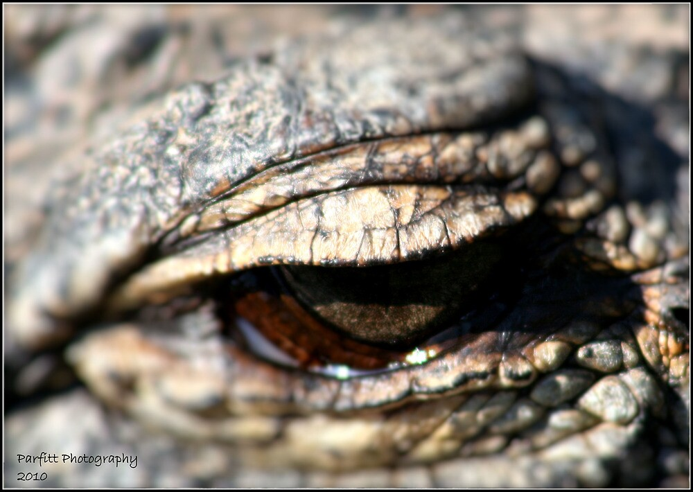 One eye on the subject by Greg Parfitt